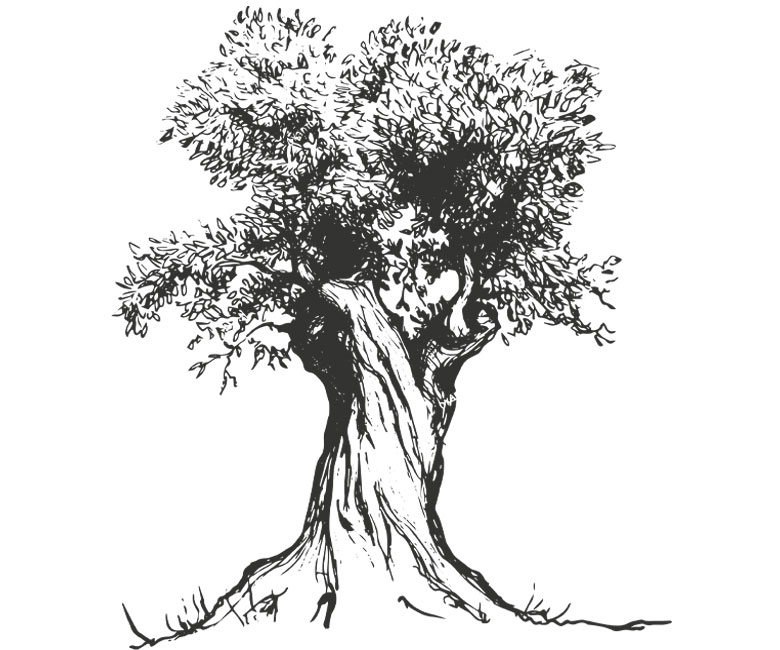 Frantoio Malavalle | Olio creato con passione